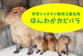 伊豆シャボテン動物公園